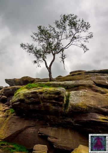 Brimham Rock (15).jpg