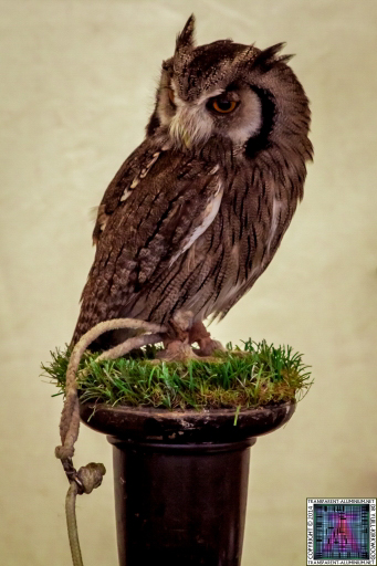 Parrot-and-Owl-Rescue-2