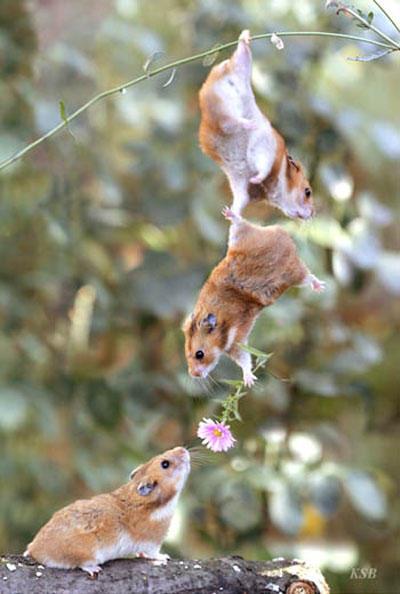 funny-teamwork-hamster-flower