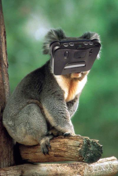 Koala N64