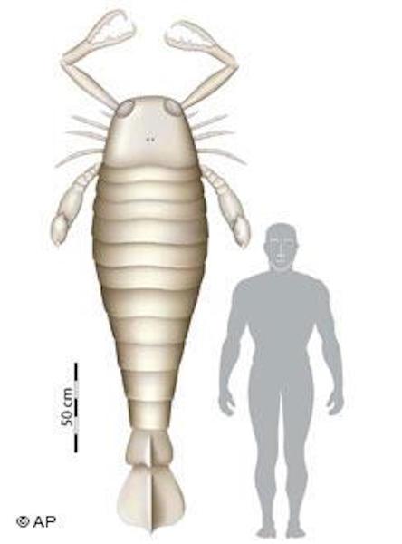 extinct-ocean-scorpion