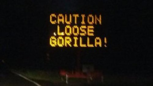 sign-hacks-gorilla