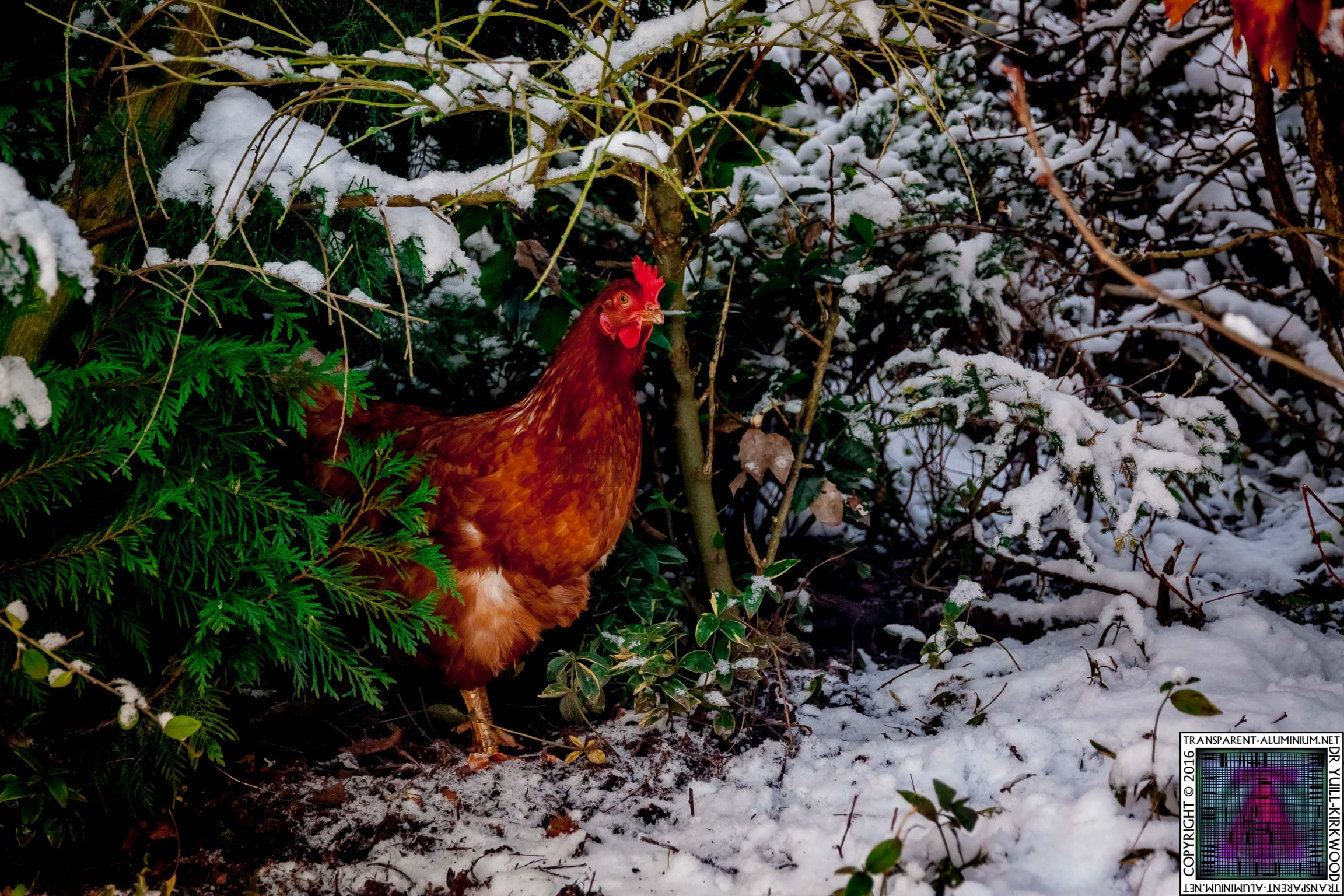 Paxo Hiding In The Snow