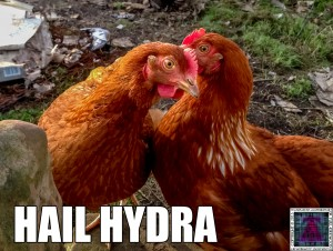 Hail Hydra I know my Chickens where up to something!