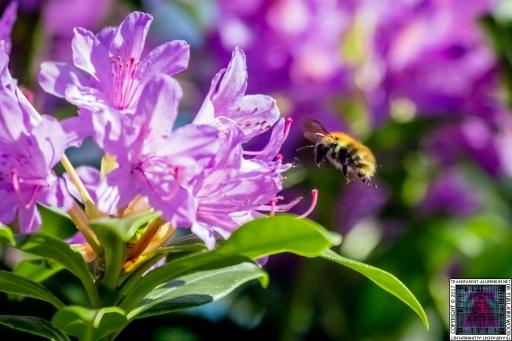 Bees at Work (1)