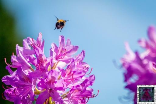 Bees at Work (2)