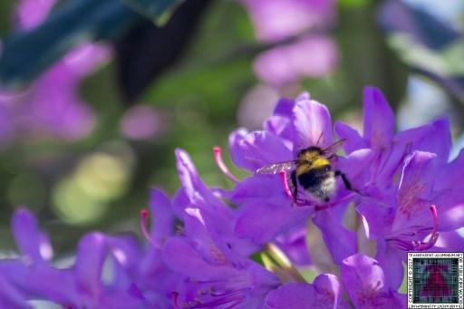 Bees at Work (3)