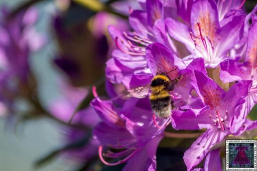 Bees at Work (4)