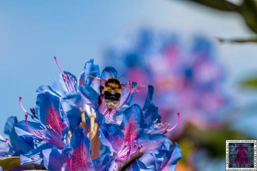 Bees at Work (5)