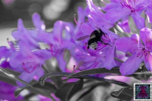 Bees at Work (6)