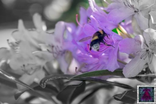 Bees at Work (7)