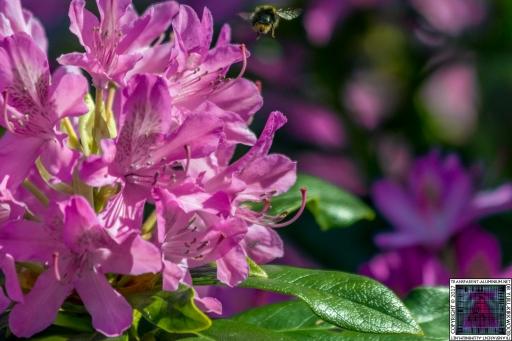 Bees at Work (8)