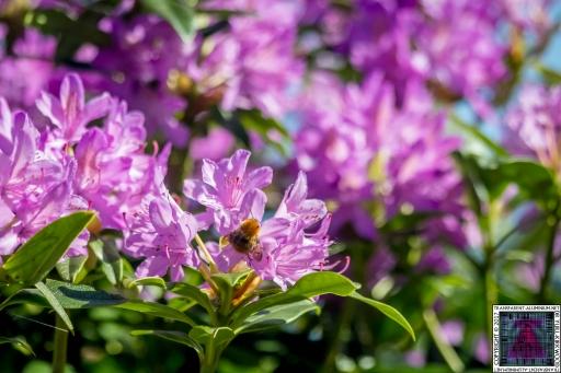 Bees at Work (9)