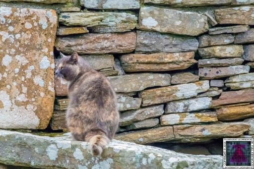 Orkney Broch of Gurness Kitten Tour Guide (3)
