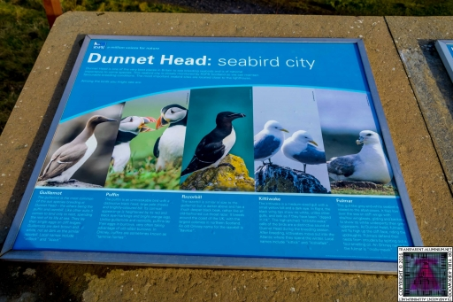 Dunnet Head (6)