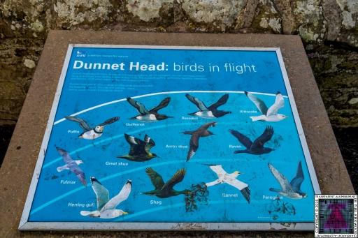 Dunnet Head (9)