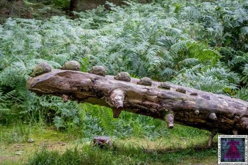 Kinnoull Hill Woodland Park (1)