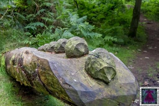 Kinnoull Hill Woodland Park (2)
