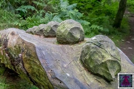 Kinnoull Hill Woodland Park (3)