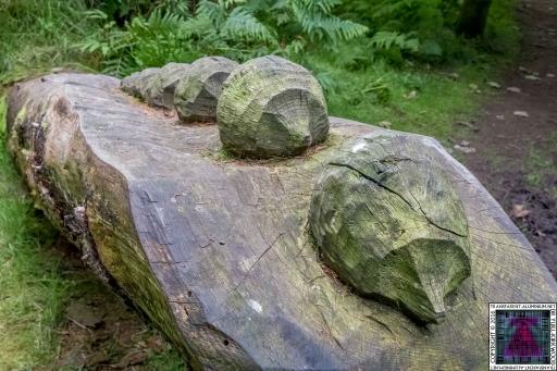 Kinnoull Hill Woodland Park (4)