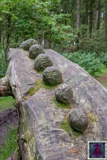 Kinnoull Hill Woodland Park (5)