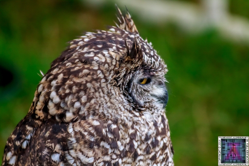 Parrot-and-Owl-Rescue-6