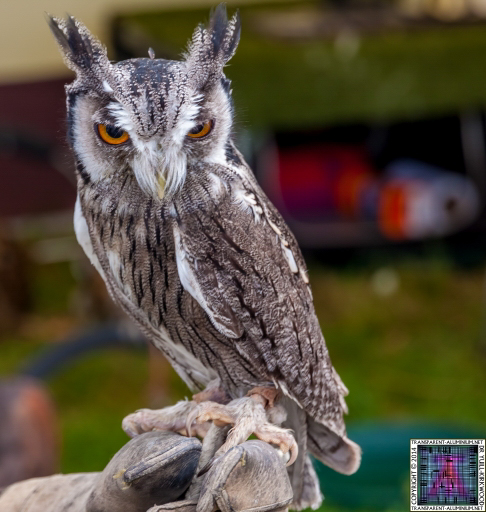 Parrot-and-Owl-Rescue-9