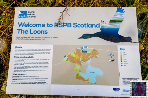 The Loons RSPB Scotland (10)