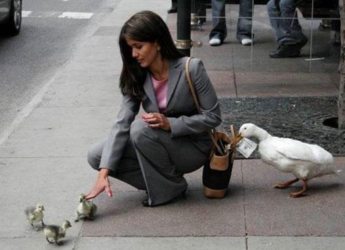 funny-teamwork-duck