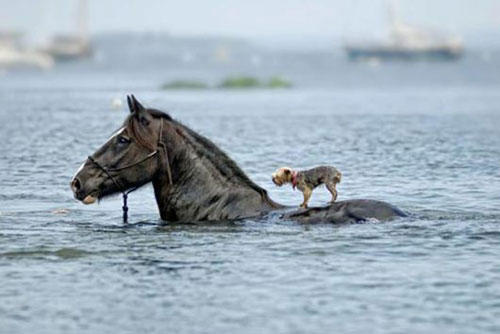 funny-teamwork-horse-dog