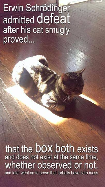 Schrodingers Cat 01