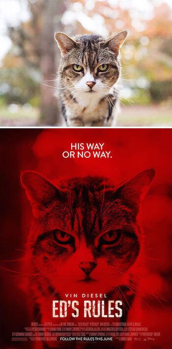 movie-poster-cat