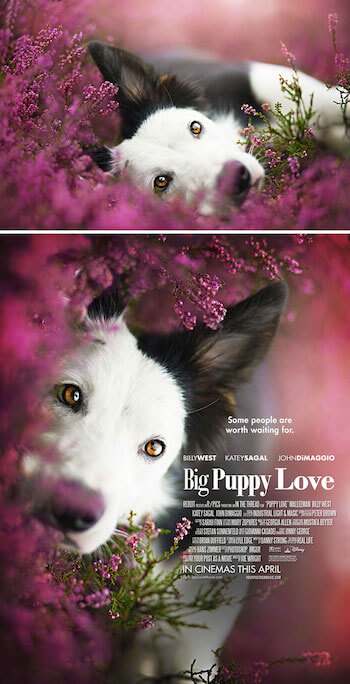 movie-poster-puppy