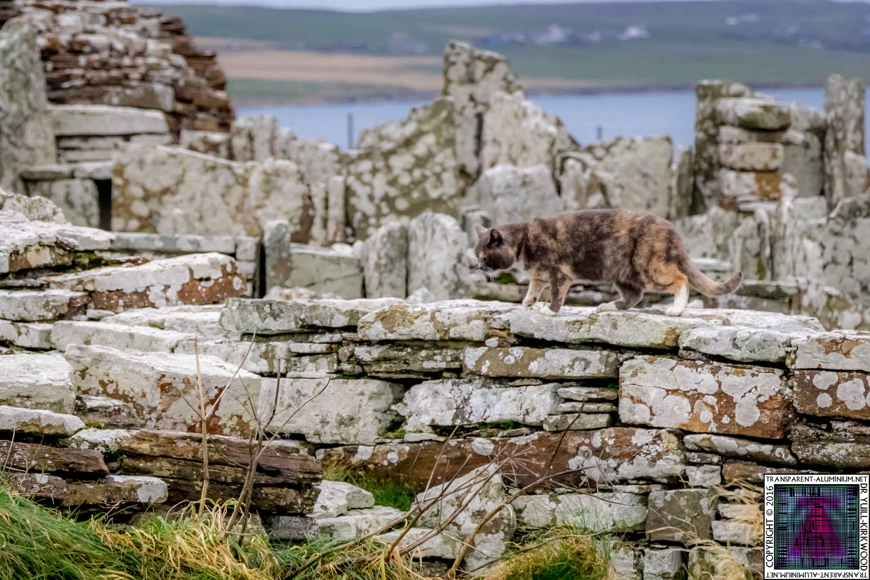 Orkney Broch of Gurness Kitten Tour Guide