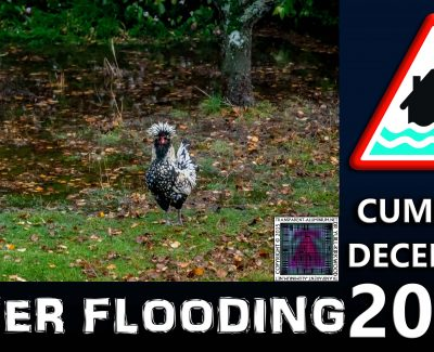 Cumbria Flooding – My Chickens Playing