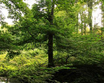 Woods – Holywell Dene