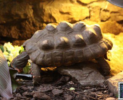 Lakeland Wildlife Oasis – Reptiles