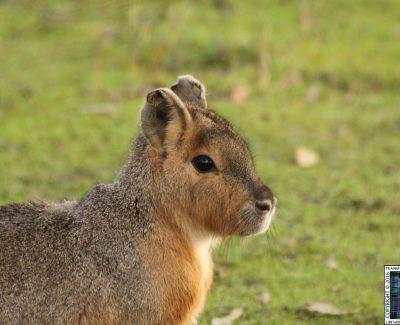 Lakeland Wildlife Oasis – Mammals