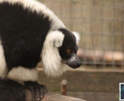 Lakeland Wildlife Oasis – Madagascar