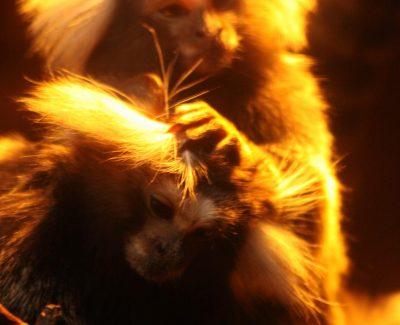 Lakeland Wildlife Oasis – Monkey