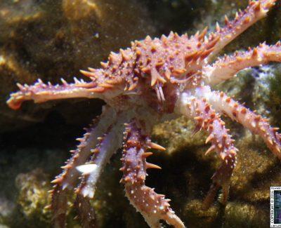 Blue Reef Aquarium: Tynemouth