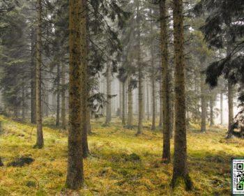 Kielder – Forest