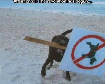 Picture Imp: The Revolution Has Begun