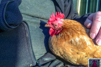 Tales From The Coop: Tikka's Street Cred