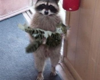Picture Imp: Raccoon Deliveries